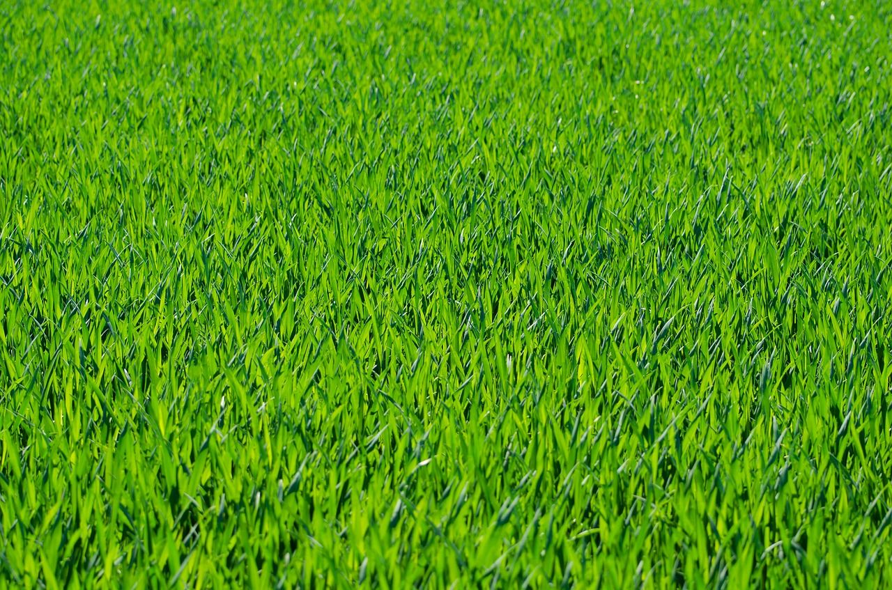 PPG - Grass background image