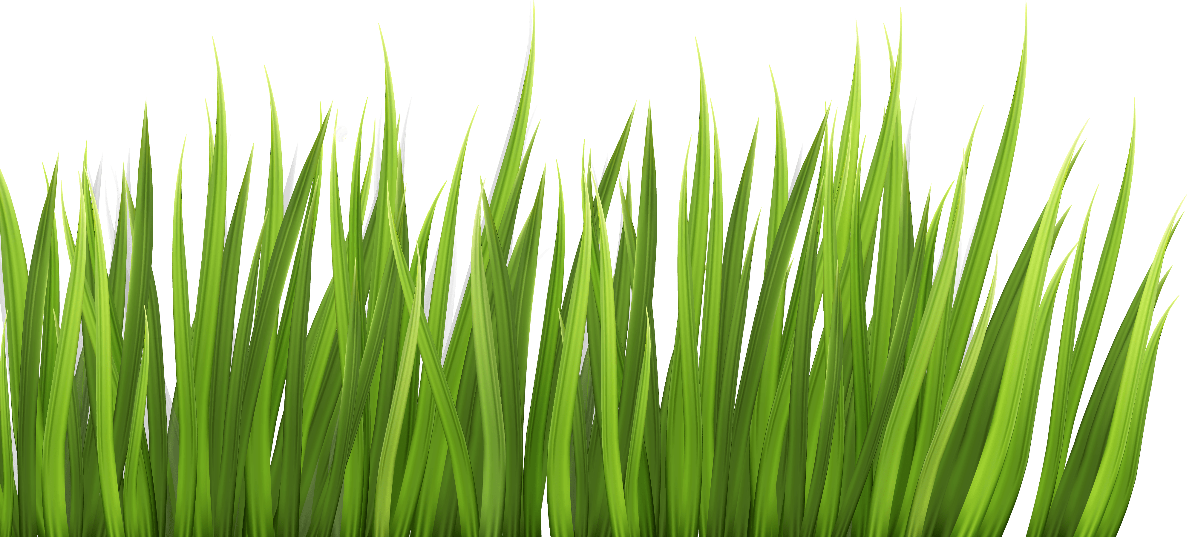 PPG - Grass Feature Cropped